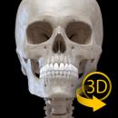 Skeleton app icon